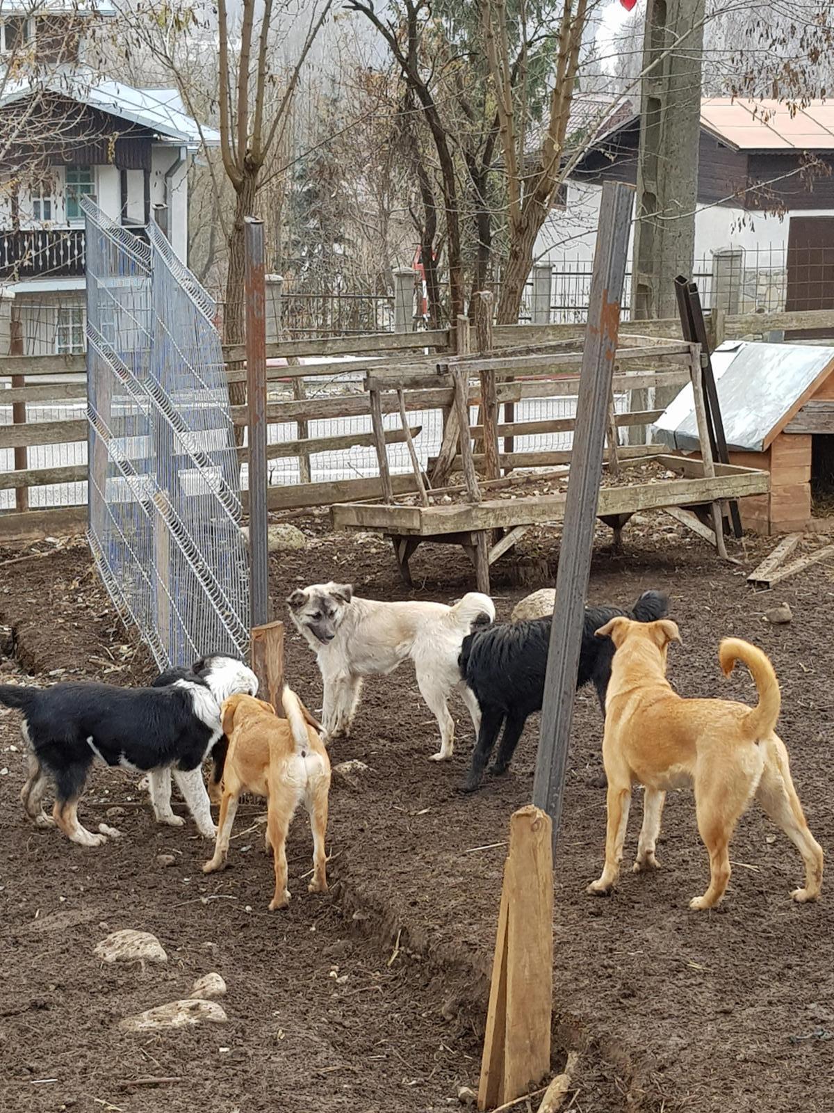Tierschutz Câmpina