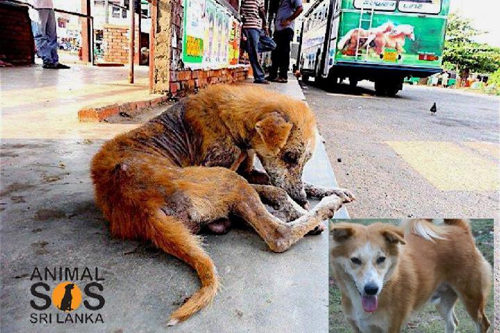 Animals SOS Sri Lanka-España