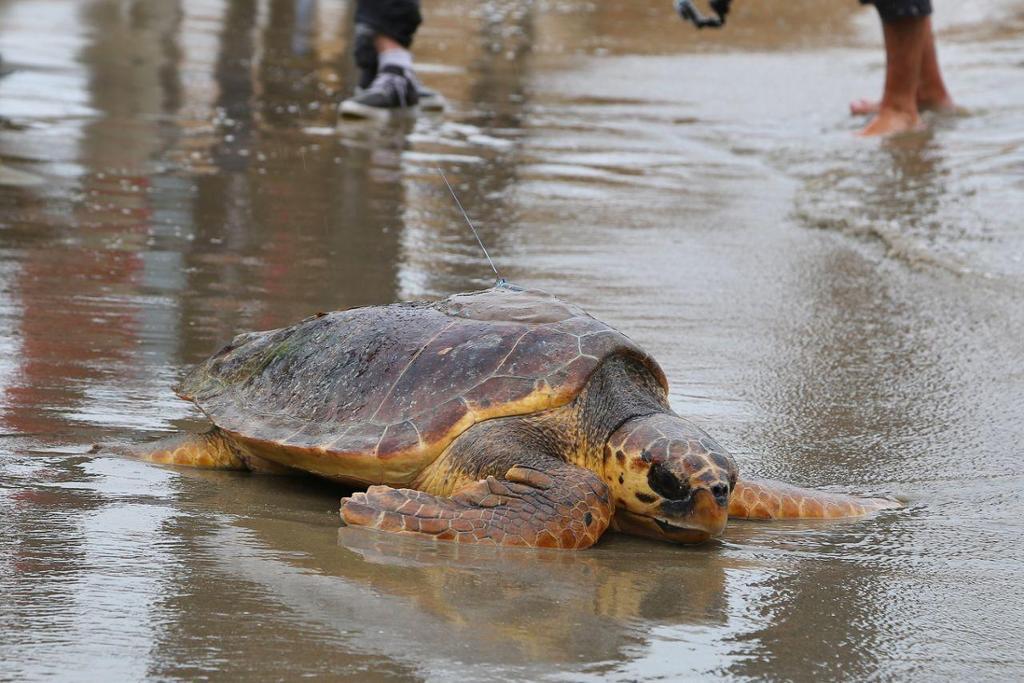 XALOC Seguimiento de Tortugas Marinas