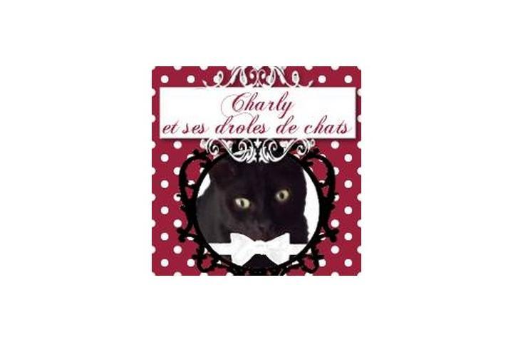 charly et ses droles de chats