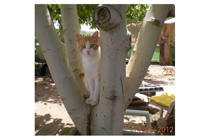 Gatos del Ave Proteger Los Inocentes. LLeida