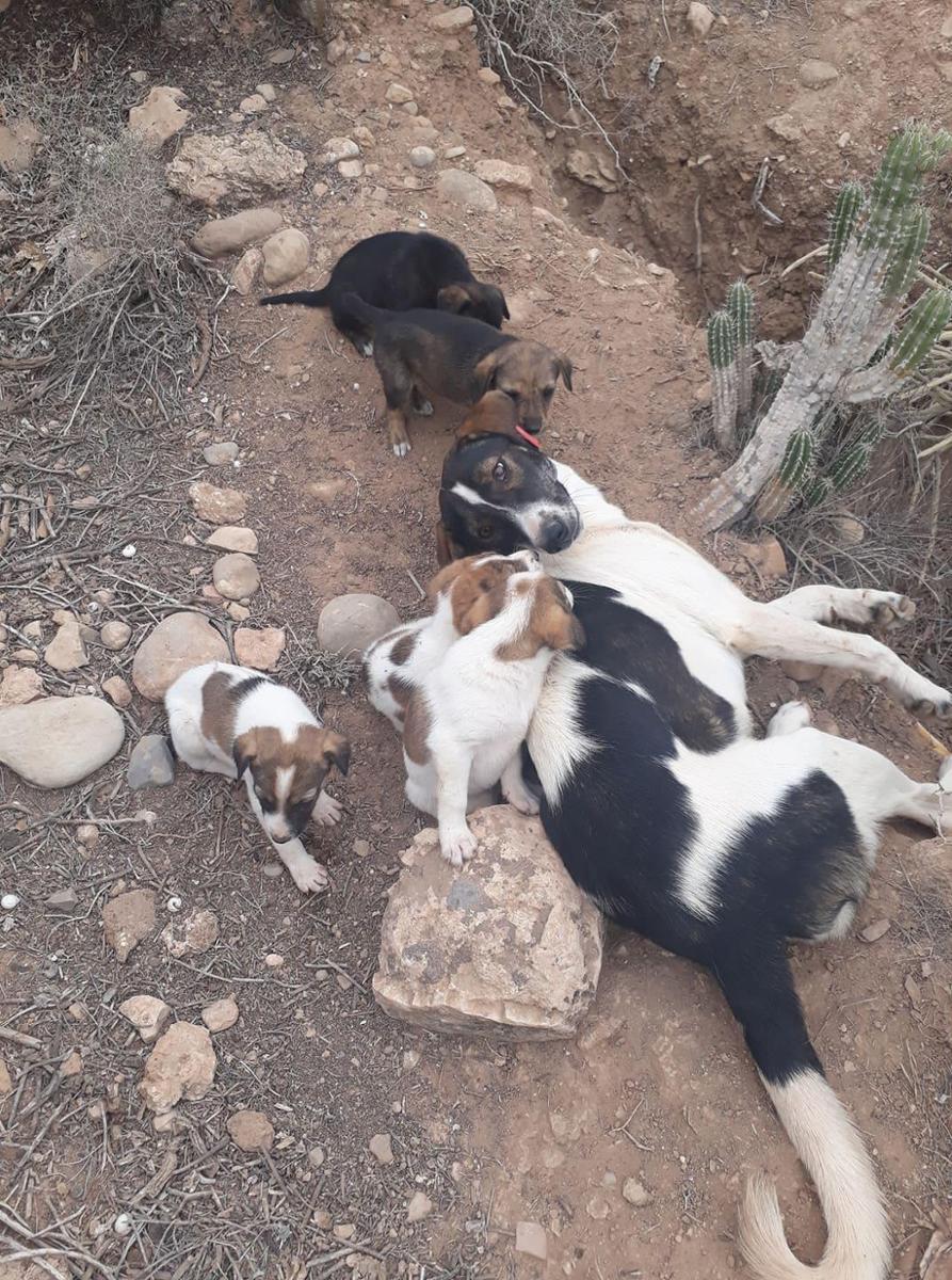 Aidons pour stériliser et vacciner les chiens de Aourir Maroc