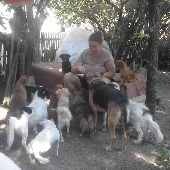 FORGOTTEN DOGS SHELTER