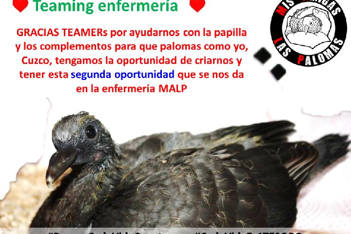 Mis Amigas Las Palomas (MALP)_Enfermería
