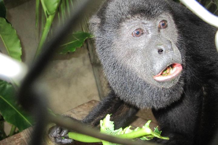 Rehabilitación y Liberación de Vida Silvestre Neotropical YAKUSINCHI