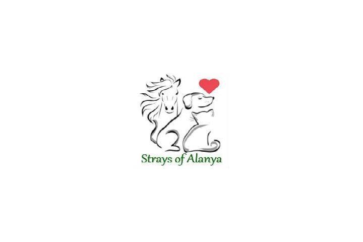 Strays of Alanya - Dog, Cat, Horse & Donkey rescue