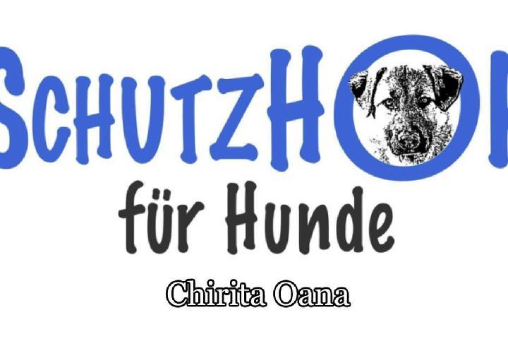 Schutzhof für Hunde Chirita Oana