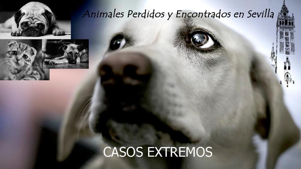 Animales Perdidos y Encontrados en Sevilla