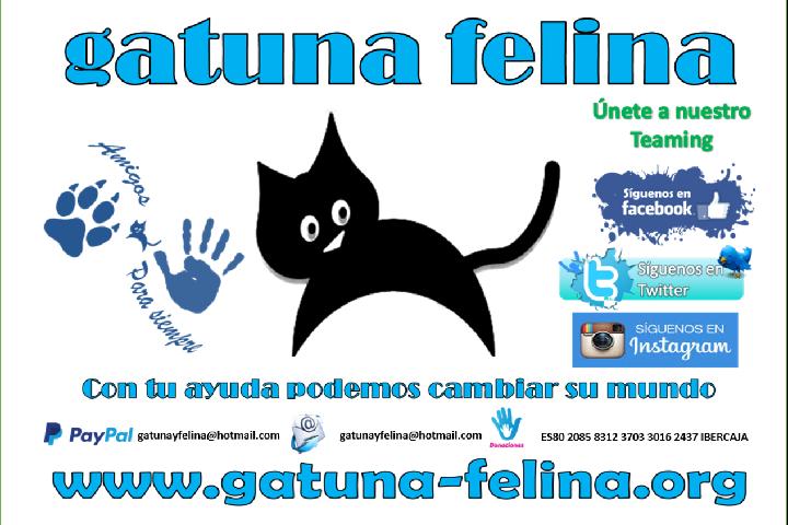 A.P.A Gatuna Felina