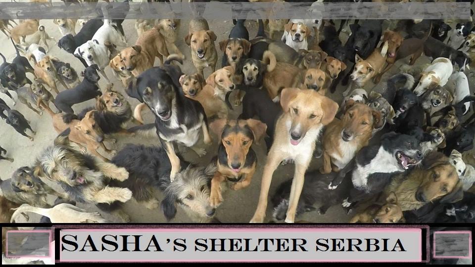 Sasha shelter Serbia