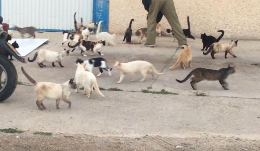 Colonia de Gatos desbordada cerca de Cadiz
