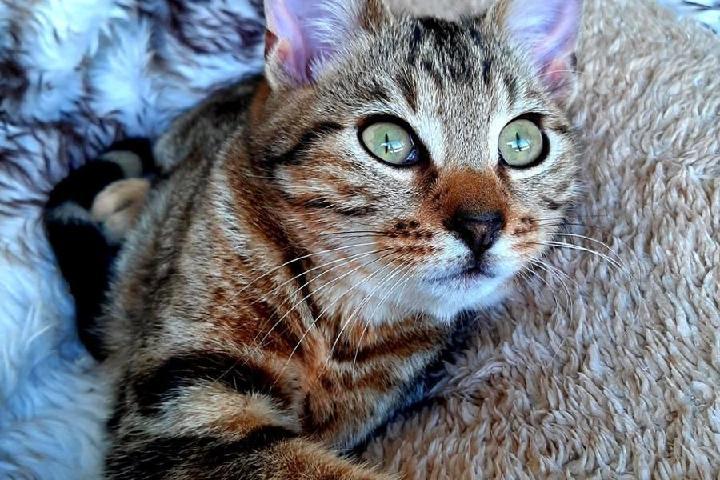 Patacha, l'association des chats et des hommes