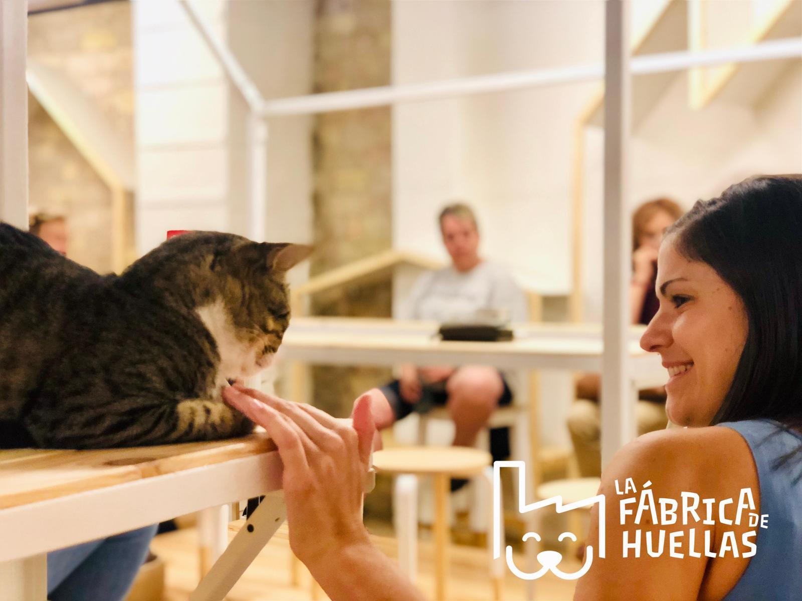 La Fábrica de Huellas (La Casa de los Gatos)