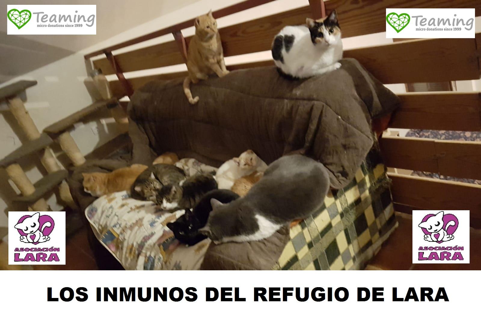 LOS INMUNO POSITIVOS REFUGIO DE LARA