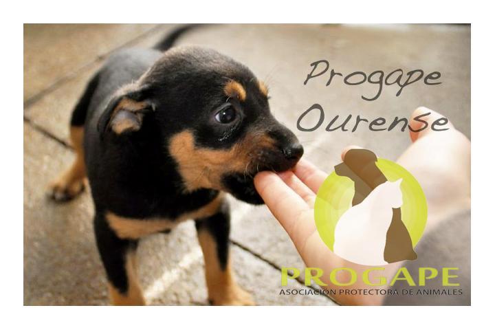 AMIGOS DE PROGAPE