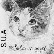 Salva un ángel ( S.U.A)