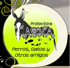 Asha Asociación de Animales de Talavera