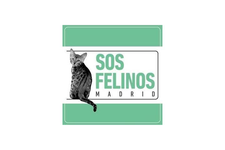 SOS FELINOS, MADRID