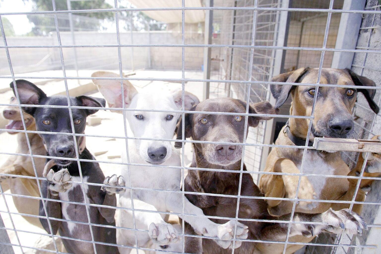 Rescate de perr@s y gat@s de Zoosanitario, Sportdog y perreras de Sevilla