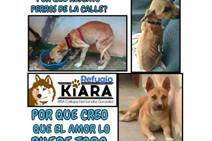 ayuda a Refugio Kiara