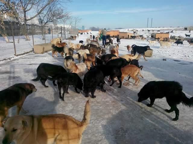 Dutch Animal Care