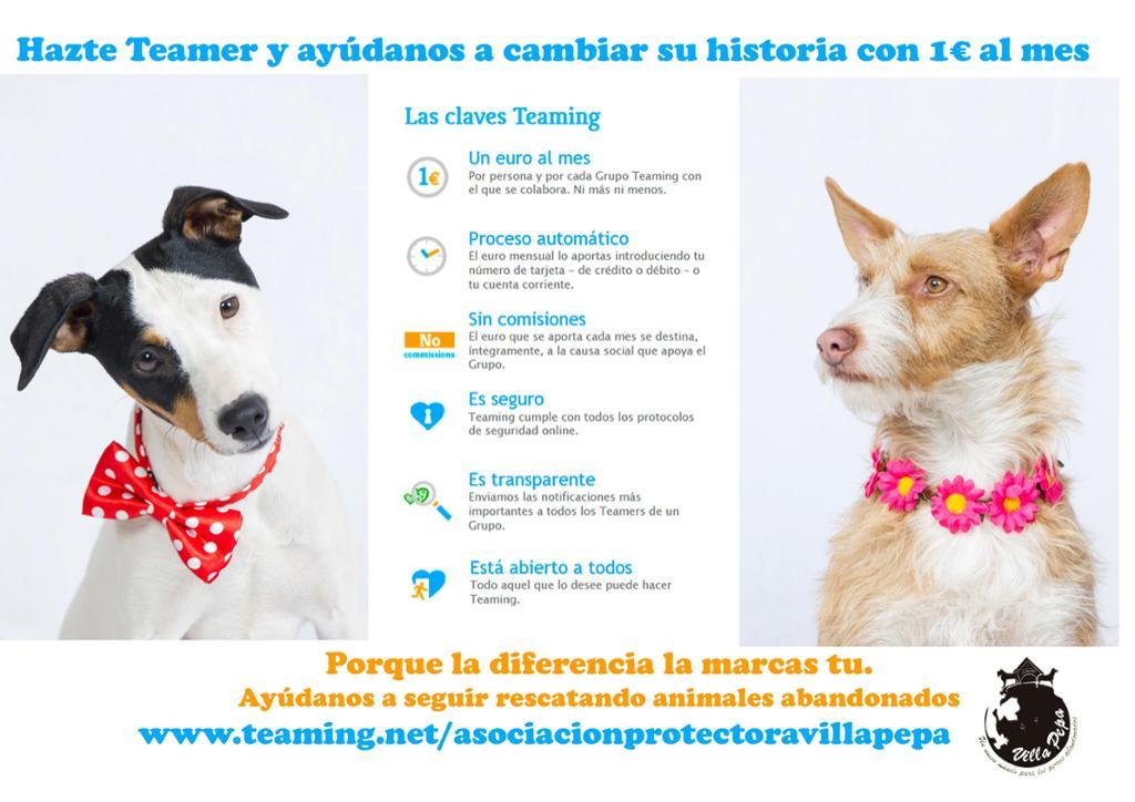 Urgencias veterinarias animales de Villa Pepa