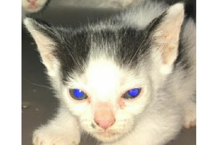 Colonias de gatitos de Massanassa