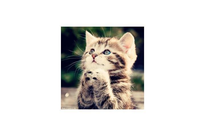 CER para los Gatos de Begoña