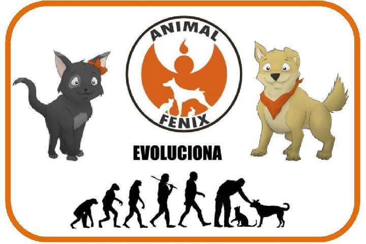 ANIMALFENIX