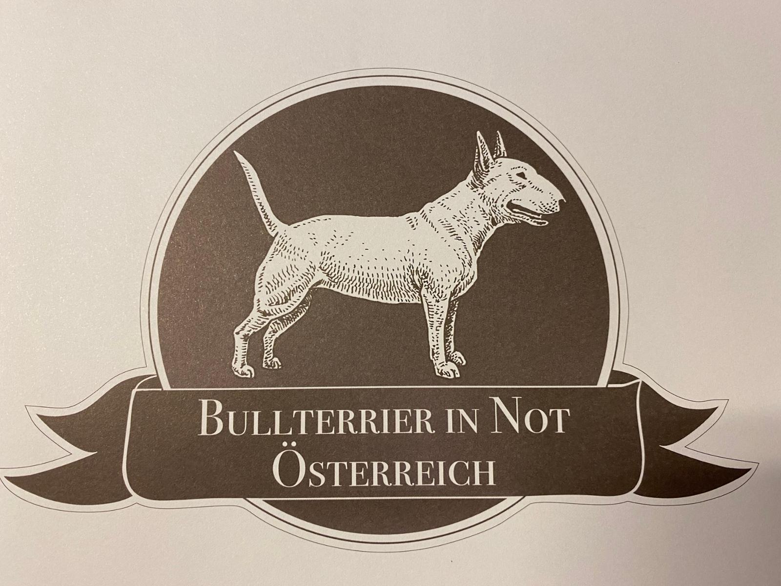 Bullterrier in Not Österreich