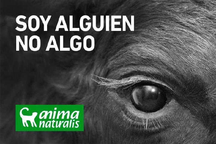 AnimaNaturalis:Por la Defensa de los Animales