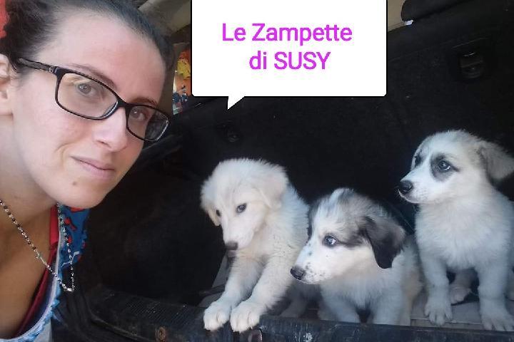 Le Zampette di Susy
