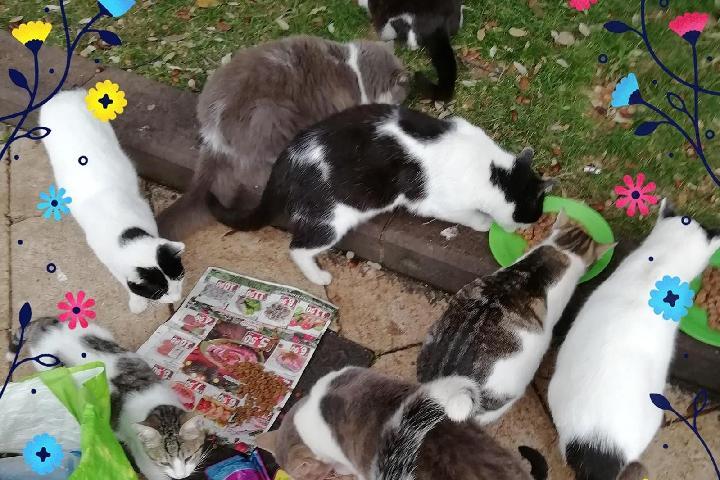 Colonia Gli Sfi-gatti e I mici di Piazza
