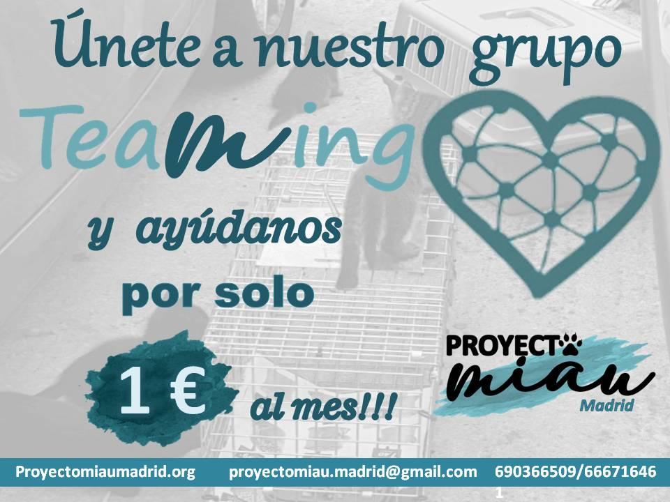 Proyecto Miau Madrid