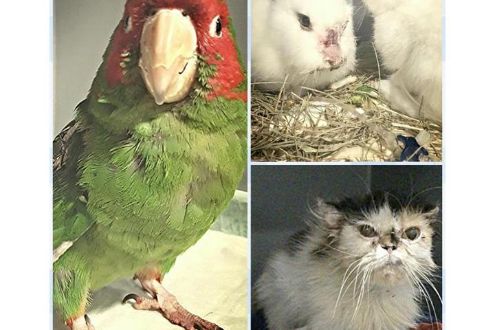 Ayuda veterinaria a los peques sin dueño