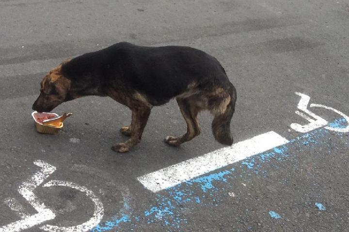 Sauver les chiens créoles de l'île de la Réunion