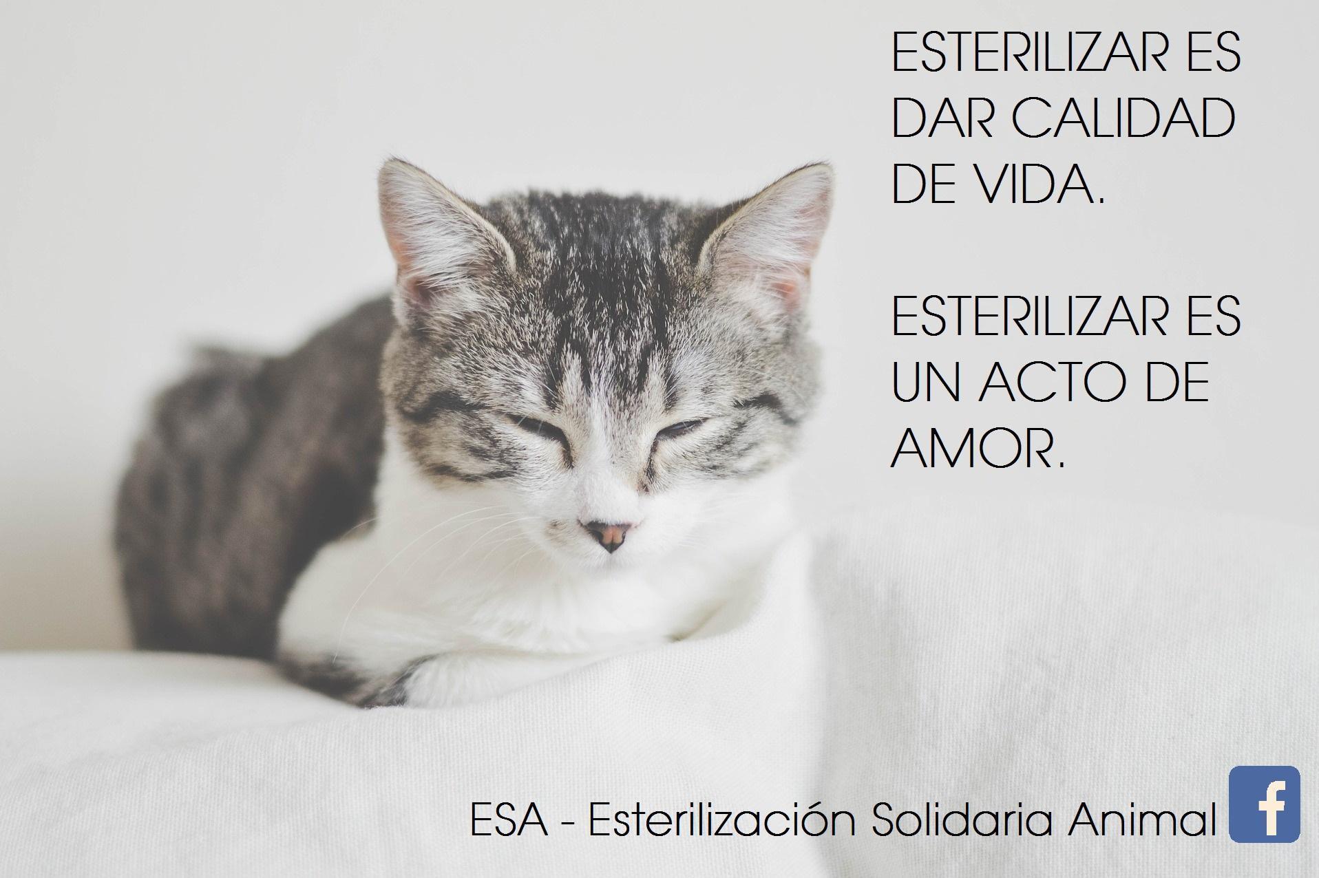 ESA - Esterilización Solidaria Animal