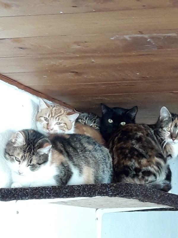 Katzenparadies Neustrelitz