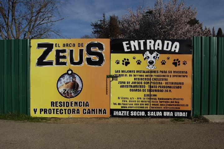 PROTECTORA EL ARCA DE ZEUS
