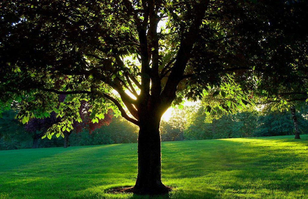 Ayuda para plantar árboles y aumentar la sombra del Refugio San Jorge
