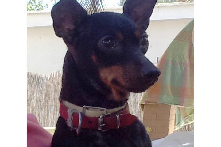 INMA DE SEVILLA, Ayuda animales abandonados