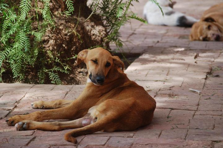 Help for our Different Dogs and Cats