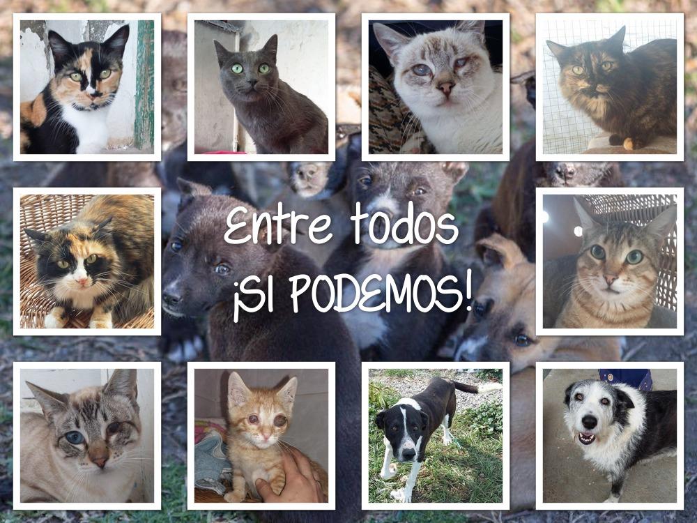 SOS ANIMALES CALAHONDA-GRANADA
