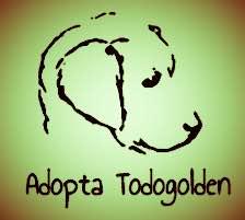 Adopta Todogolden