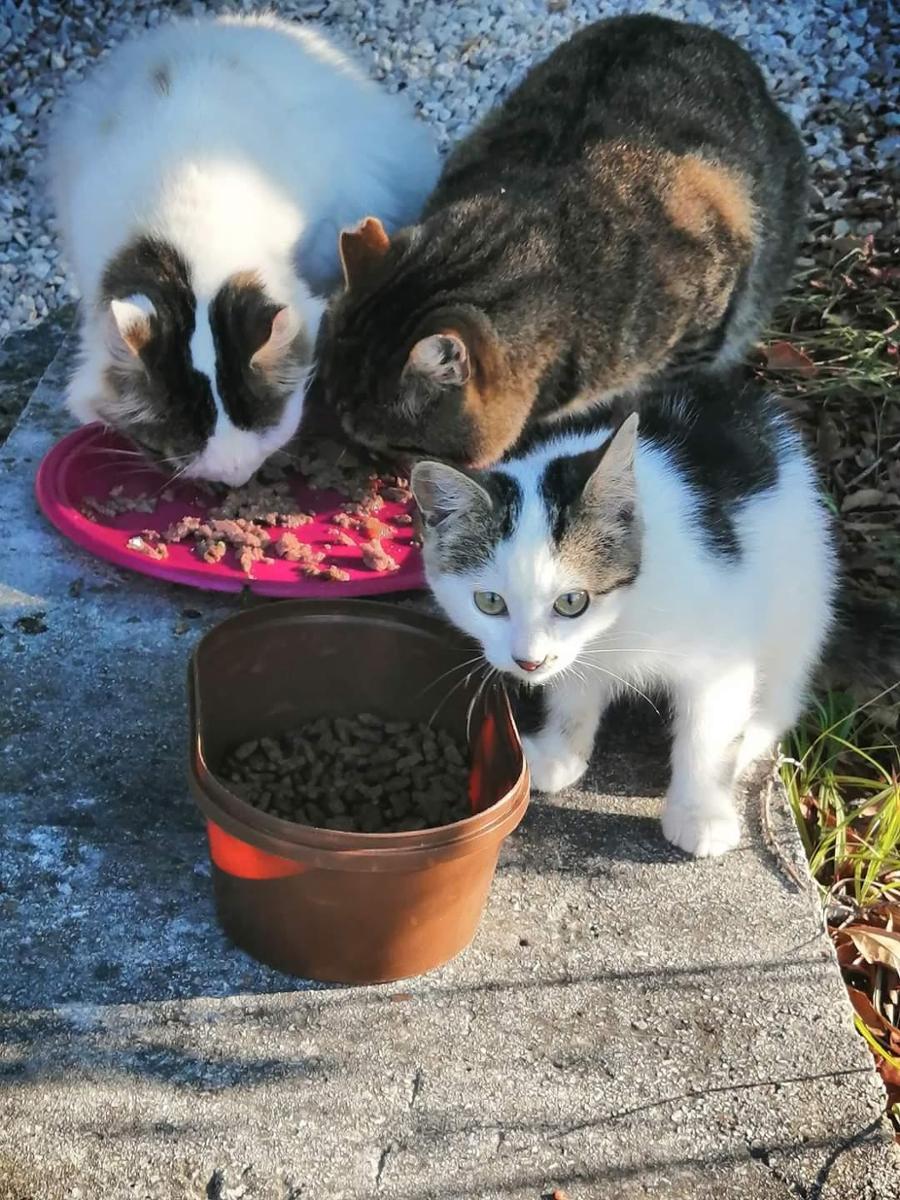 Hafen Katzen Vrsar & Pflege Katzen