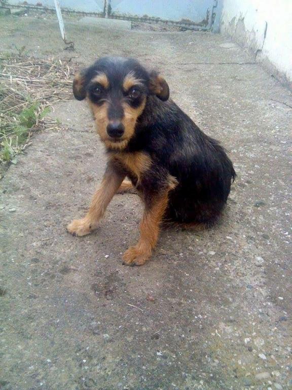 Lina's Animal Rescue - Serbia