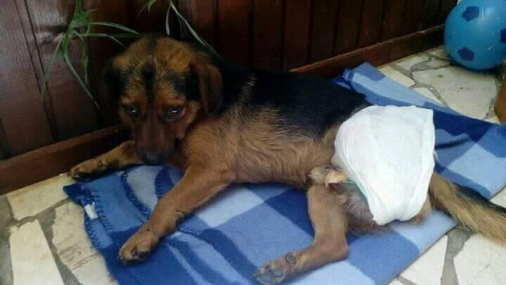 Dringend Hilfe benötigt für Straßentiere von Lost Angels Aid