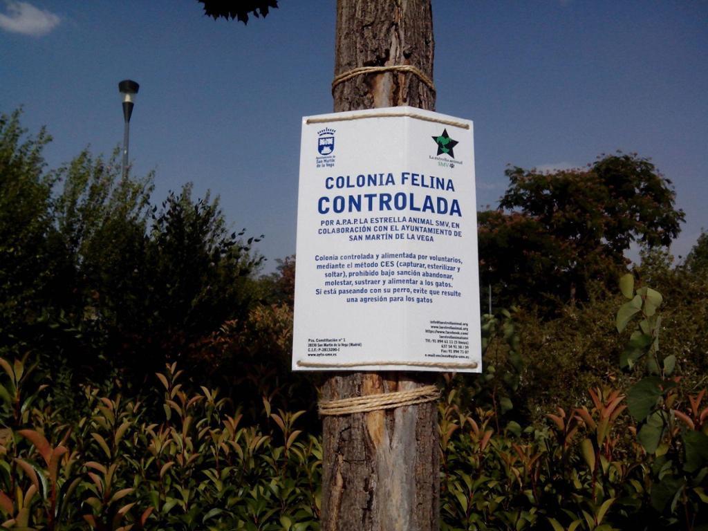 COLONIAS FELINAS-LA ESTRELLA ANIMAL SMV