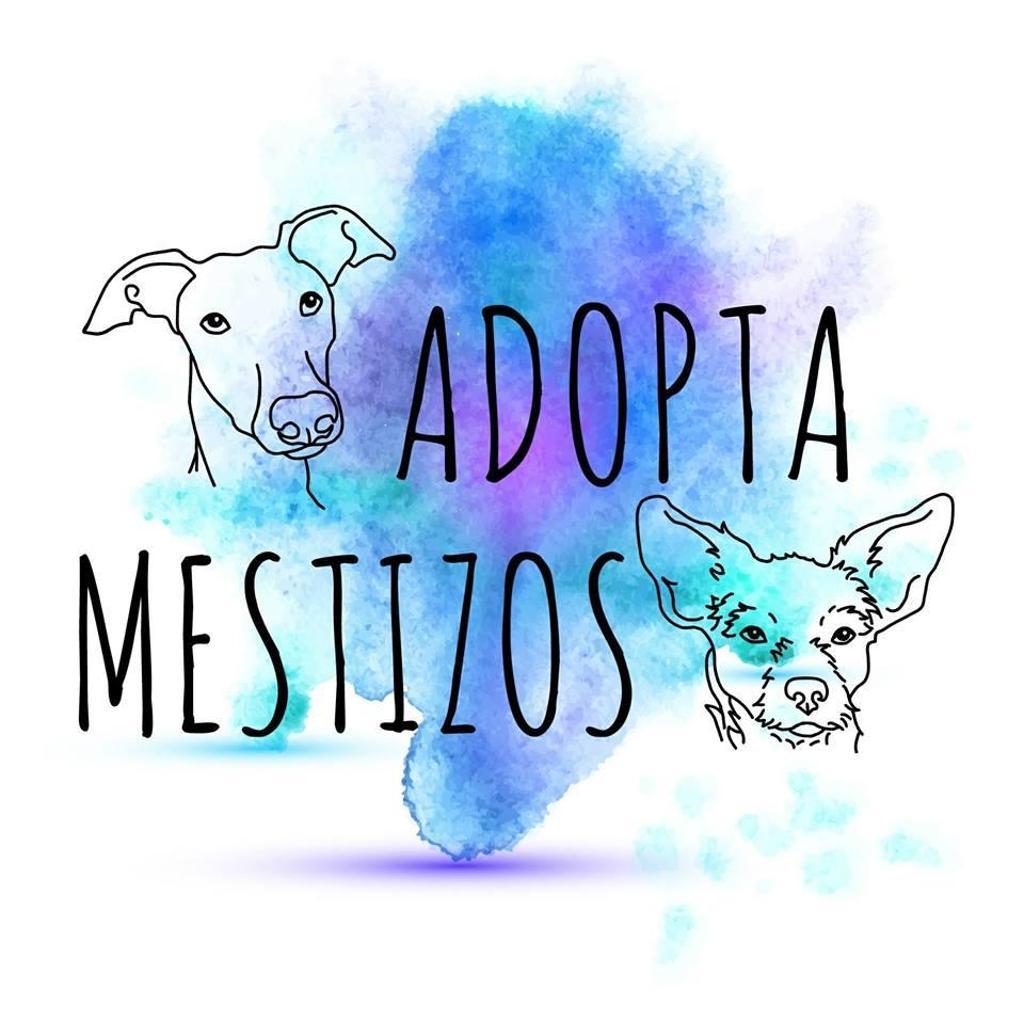 Adopta Mestizos
