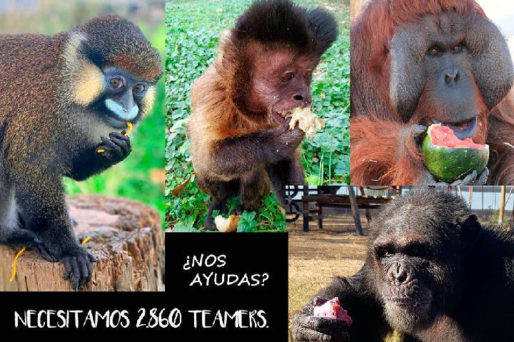 RAINFER: Alimenta a los Primates